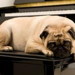 music therapy for dogs image